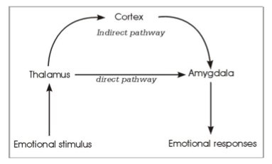 IB Psychology Notes - The cognitive level of analysis